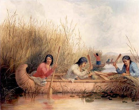 Ojibwa Gathering Wild Rice, by Seth Eastman, 1867 – colour